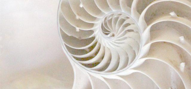 iris-schelp-website-lichter
